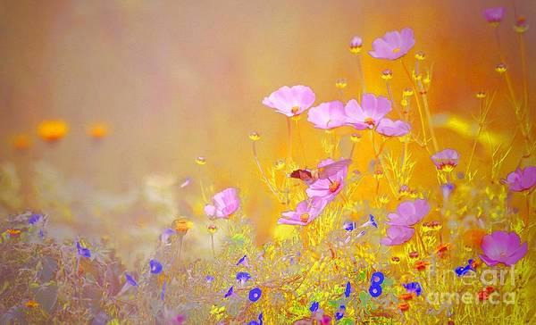 Photograph - Golden Meadows by John  Kolenberg