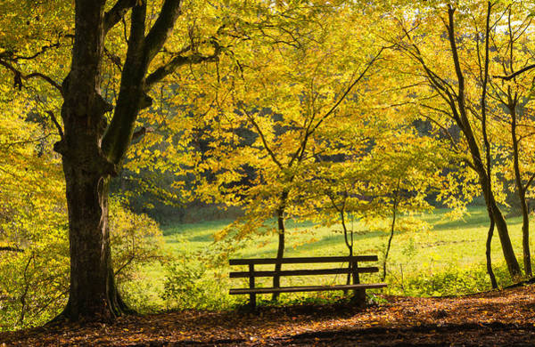 Photograph - Golden October - Bench And Yellow Trees In Fall by Matthias Hauser
