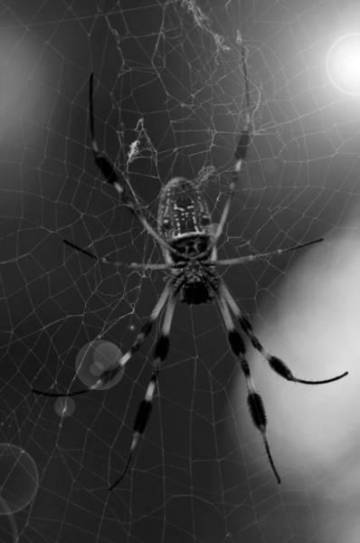 Golden Orb Spider Photograph - Golden Silk Orb-weaver by Melissa Wyatt