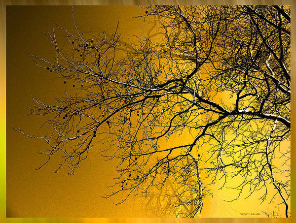 Wall Art - Photograph - Golden Walnut Tree by Heinz G Mielke