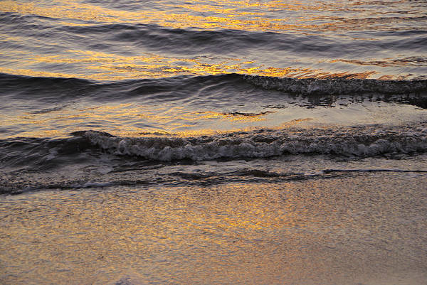 Photograph - Golden Waves by Marilyn Wilson