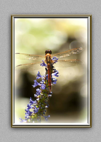Photograph - Golden Wings by Carolyn Marshall