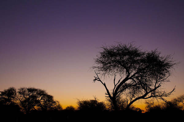 Photograph - Good Morning Africa  by Andy Bitterer