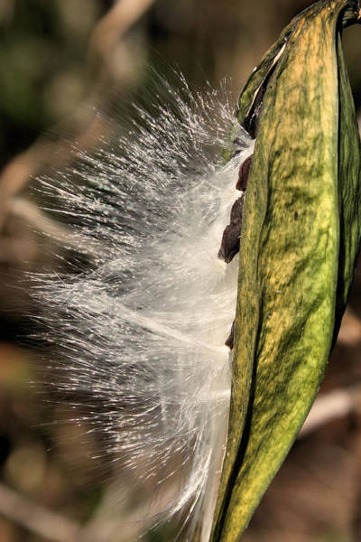 Photograph - Gossamer Wings by Kristin Elmquist