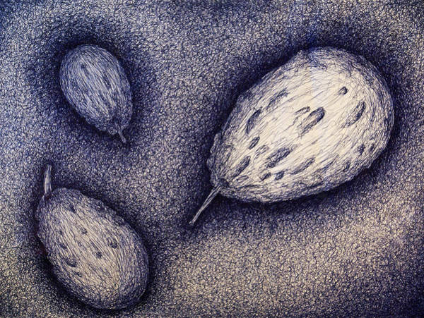 Coolidge Drawing - Gourds- Blue by Sara Coolidge