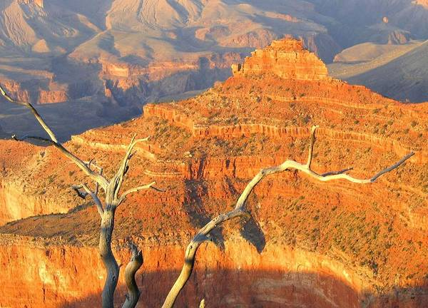 Photograph - Grand Canyon 40 by Will Borden