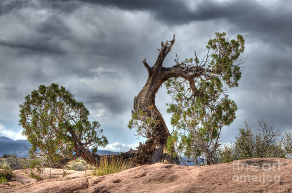 North Rim Photograph - Grand Canyon Facing The Storm by Bob Christopher