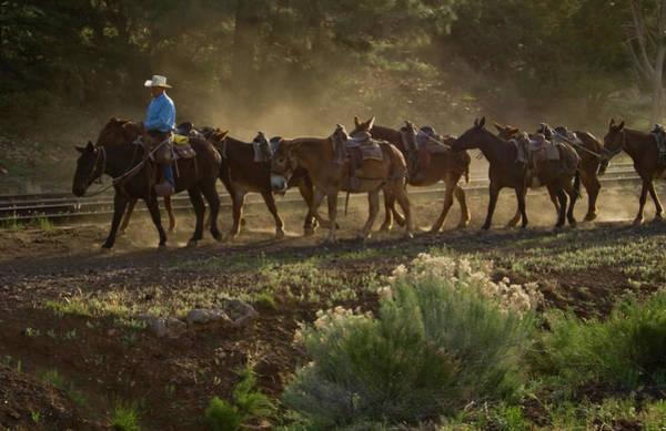 Photograph - Grand Canyon Mules by Tom Singleton