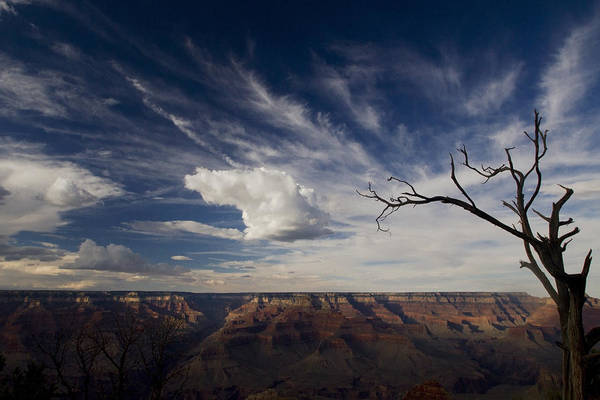 Photograph - Grand Canyon With A Tree by Sven Brogren