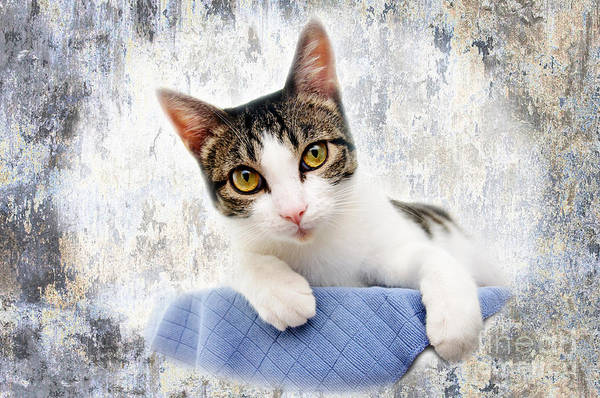 Photograph - Grand Kitty Cuteness 2 by Andee Design