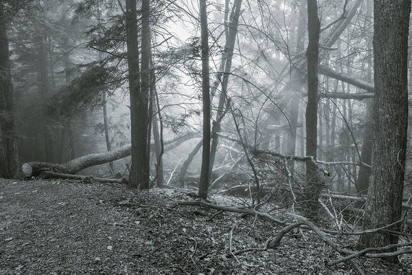 Photograph - Grandview Fog by Mary Almond