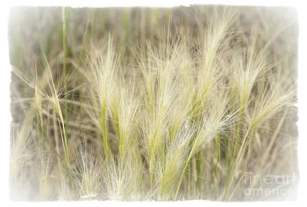 Photograph - Grass by David Waldrop