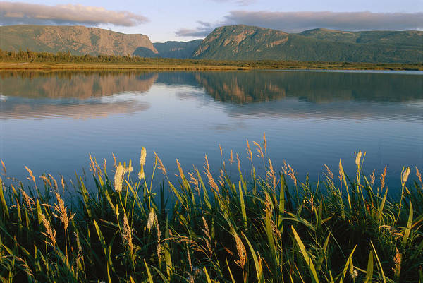 Gros Morne Photograph - Grasses Grow Along The Edge Of A Lake by Michael S. Lewis