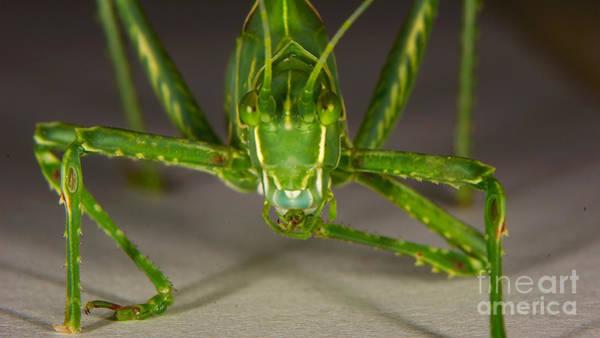 Photograph - Grasshopper Portrait by Mareko Marciniak