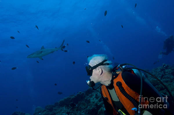 Photograph - Gray Reef Shark With Diver, Papua New by Steve Jones