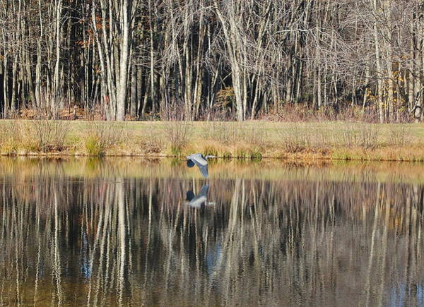 Photograph - Great Blue Heron In November by Mary McAvoy