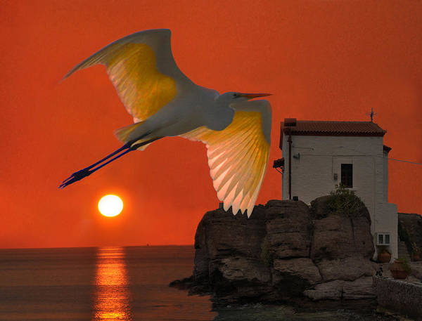 Barn Owl Mixed Media - Great Egret Sunset In Skala by Eric Kempson