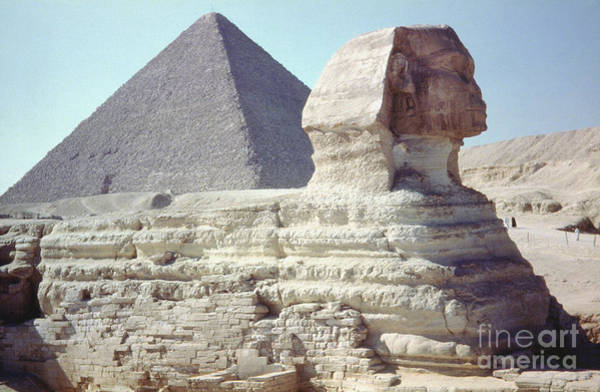 Photograph - Great Sphinx And Pyramid by Granger