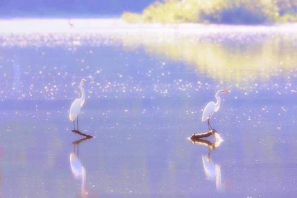 Photograph - Great White Heron by Emmanuel Panagiotakis