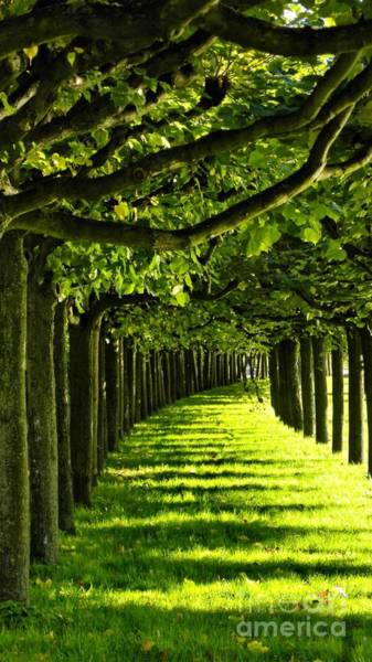 Gruen Photograph - Green Allee by Tanja Cathrin  Liebig