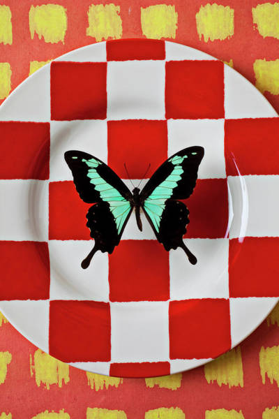Checker Photograph - Green And Black Butterfly On Red Checker Plate by Garry Gay