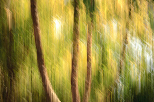 Photograph - Green And Gold by Keith Allen