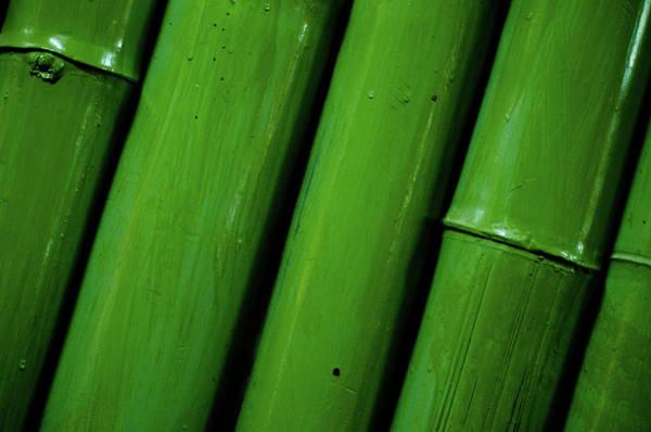 Laos Photograph - Green Bamboo by Megan Ahrens