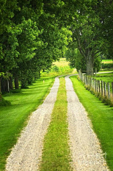Gravel Road Photograph - Green Farm Road by Elena Elisseeva