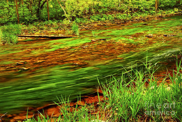 Brook Photograph - Green Forest River by Elena Elisseeva