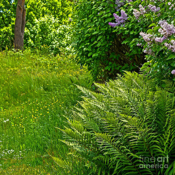 Photograph - Green Garden by Lutz Baar