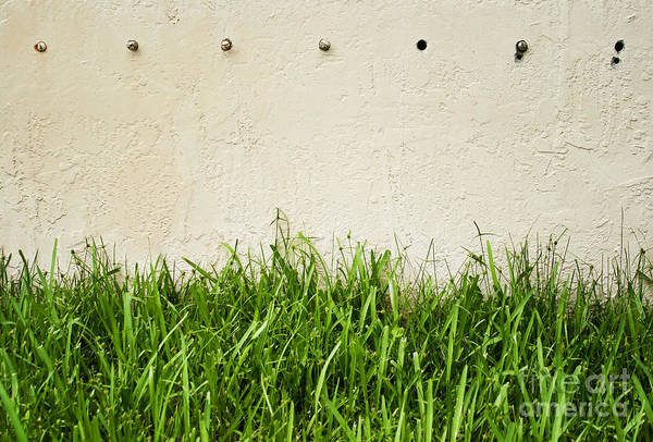 Wall Art - Photograph - Green Grass Against Wall by Blink Images
