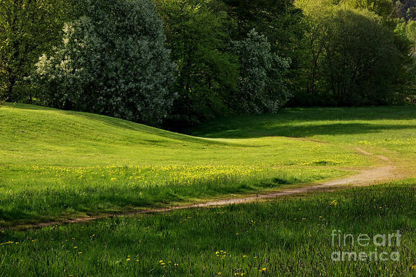 Photograph - Green Green Grass Of Home by Lutz Baar