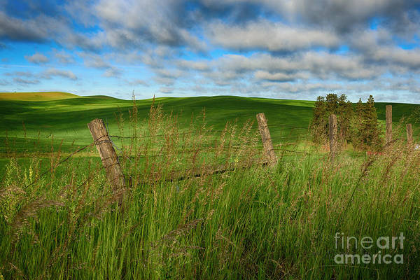 Photograph - Green Green Grass Of Home by Beve Brown-Clark Photography