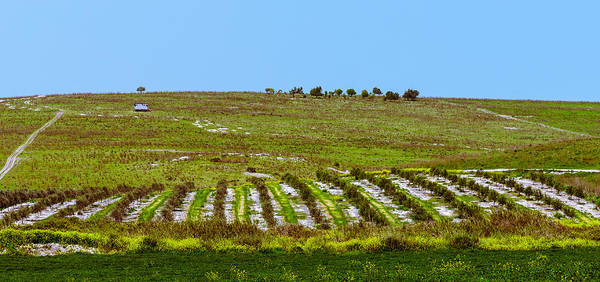 Photograph - Green Hills by Michael Goyberg