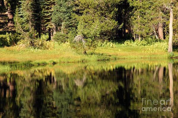 Photograph - Green In Summit Lake by Adam Jewell