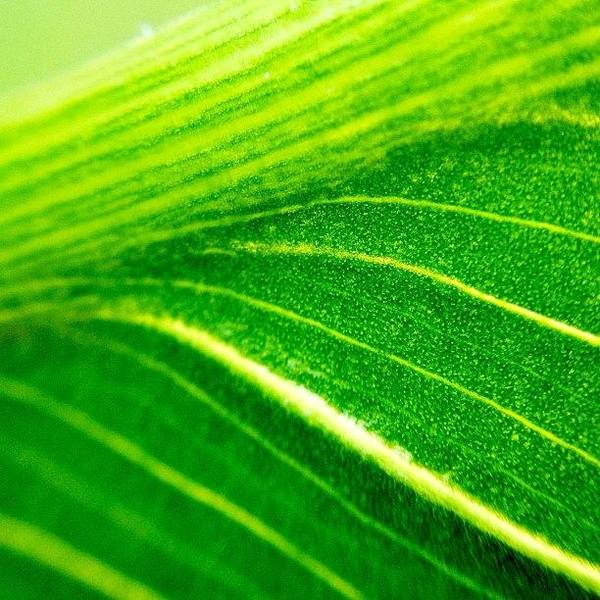 Wall Art - Photograph - Green Life by Christopher Campbell