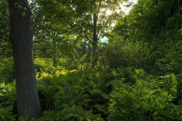 Chicago Botanic Garden Photograph - Green Light by Steve Gadomski