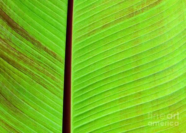Photograph - Green Lines by Sabrina L Ryan