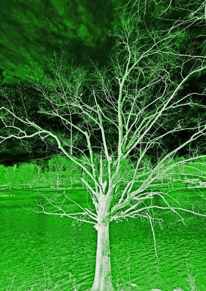 Photograph - Green Magic Tree by Sheila Kay McIntyre