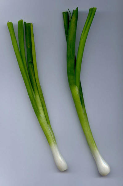 Photograph - Green Onion  by Dragan Kudjerski