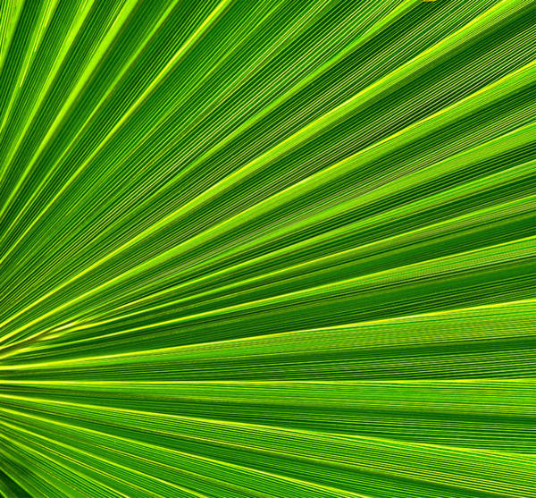 Photograph - Green Perspective by Steven Huszar