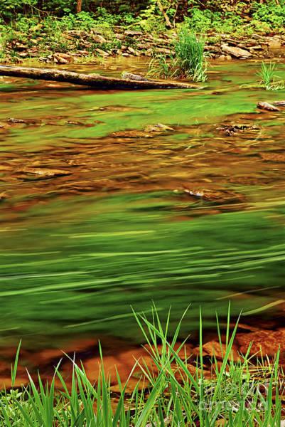 Brooks Photograph - Green River by Elena Elisseeva