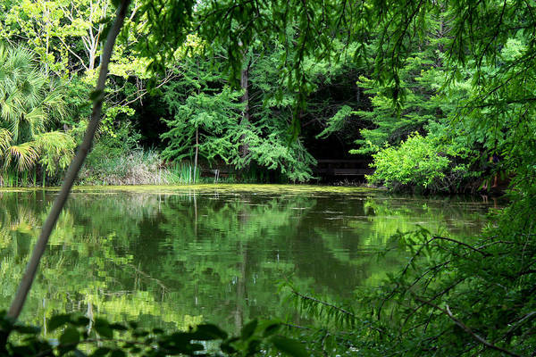 Photograph - Green Tranquility by Sarah Broadmeadow-Thomas