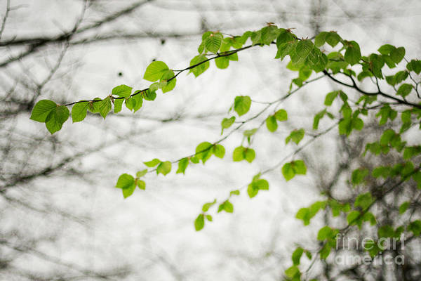 Green And Gray Photograph - Green by Violet Gray