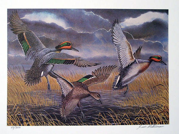 Wall Art - Painting - Green Winged Teal Duck by Jim Hitesman