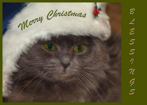 Photograph - Grey Cat Santa 2 by Joann Vitali