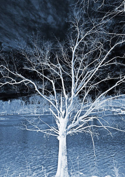 Photograph - Grey Magical Tree by Sheila Kay McIntyre