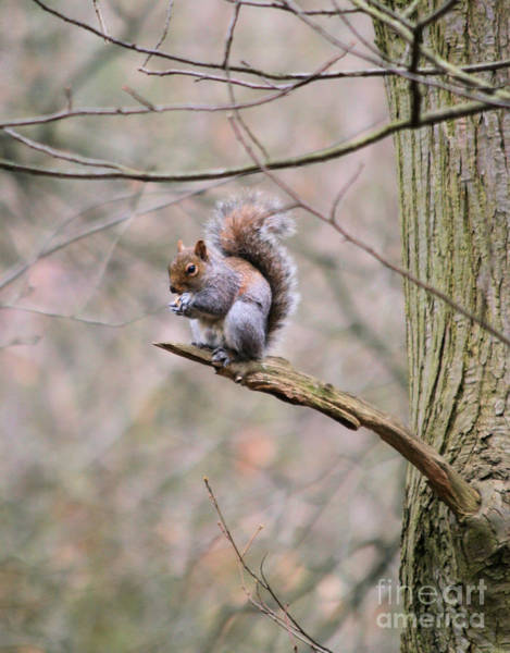Wall Art - Photograph - Grey Squirrel 2 by Ruth Hallam