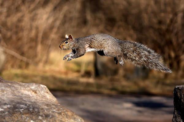 Wall Art - Photograph - Grey Squirrel by Jim Cumming