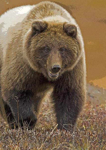 Grizzly Bears Digital Art - Grizzly Bear- Eye To Eye- Abstract by Tim Grams